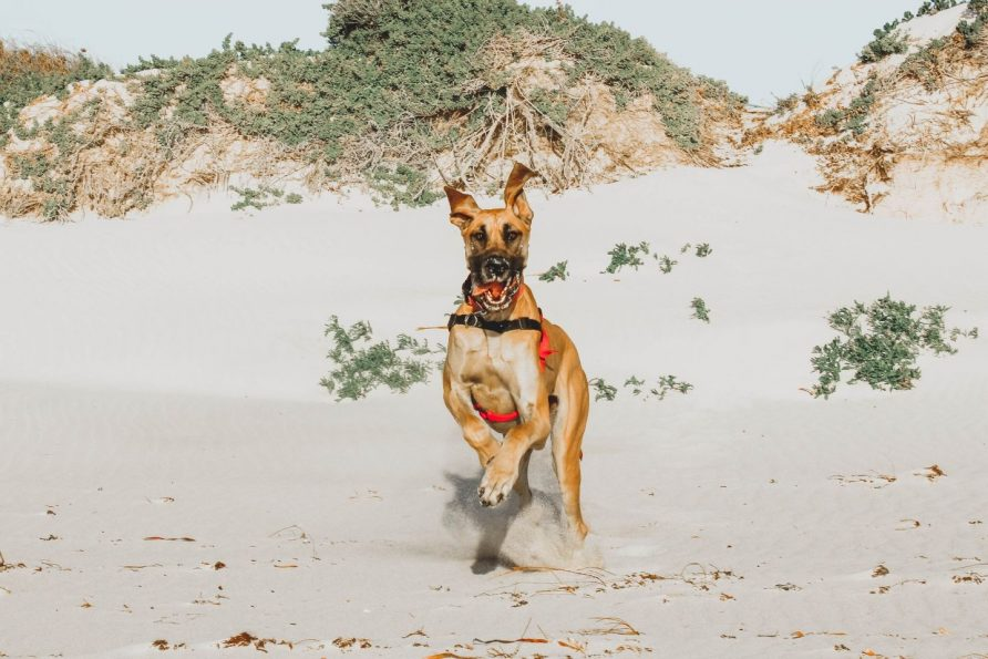 Top Dog Activities & Pet Friendly Accommodation in Lancelin